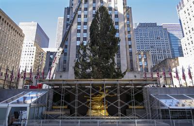 Este año, sentimos que el árbol es vital, dijo en un comunicado Rob Speyer, el consejero delegado de Tishman Speyer, la compañía propietaria del Rockefeller Center.
