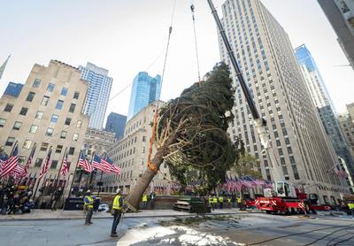 Este año, sin embargo, el público no ha tenido acceso a la llegada del árbol, pero los detalles sobre cómo podrá visitarse serán anunciados en los próximos días.