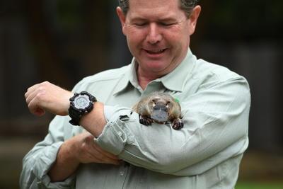 Se compromete zoológico de Australia a salvar al ornitorrinco de la extinción