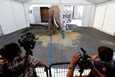 Liberan a elefante de circo para trasladarlo a zoológico en Sinaloa