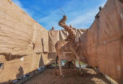 Imagen de Ami Vitale, ganadora de la categoría Naturaleza - Primer premio individual en el World Press Photo 2021.