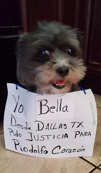 Mascotas 'exigen' justicia para 'Rodolfo' con campaña en redes sociales