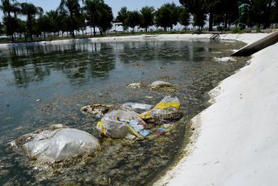 Aguas verdes. El pequeño lago de los patos se observa en pésimas condiciones. Generalmente se acumula la basura en los alrededores y el agua es verde y lamosa, lo que impide que las aves tengan una buena calidad de vida.