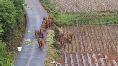 Hasta el momento no ha habido daños a personas ni animales, pero los cultivos han sufrido daños que superan el millón de dólares.