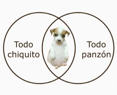 'Todo chiquito, todo panzón'; el meme del perrito que 'cautiva' en la red
