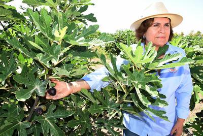 Emprendedora trabaja para convertir a La Laguna en la primera productora de higo a nivel internacional