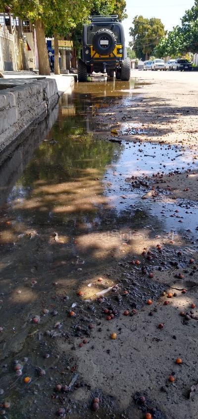 Mal olor. Se presenta mal olor en la calle J. Manuel Reyes Valenzuela donde en un día normal por casi 100 metros se encuentra colapsado el drenaje.