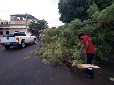 Protección Civil de Gómez Palacio reporta cerca de 10 árboles caídos por la lluvia