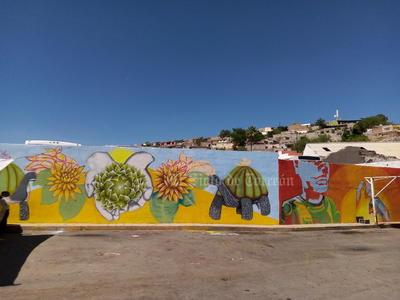 Artistas urbanos pintan murales en la Antigua Harinera, edificio de Torreón