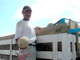 Preparan la tierra para sembrar melón y sandía | AGROPECUARIA