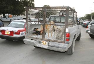 Harán campaña para esterilizar a perros y gatos en G. Palacio