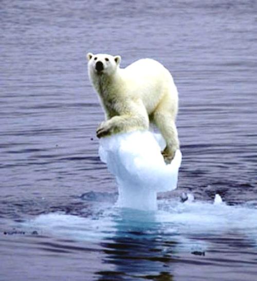 Efecto del cambio climático sobre la biodiversidad | EcoMundo