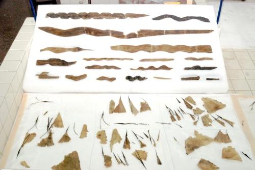 Restauran cetros prehispánicos