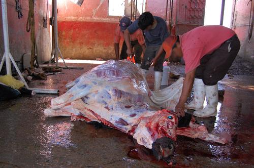 Los mataderos manipulan la carne entre la mugre