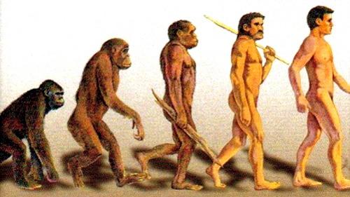Asegura investigación que el hombre no proviene del mono