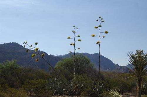 Un estudio para cuidar al desierto