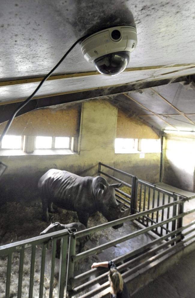 Se incrementan medidas de seguridad en Zoo