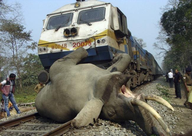 Muere un elefante al ser atropellado