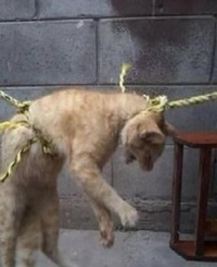 Ahorca a su gato comparte foto en facebook sucesos - Perrera de vilafranca ...