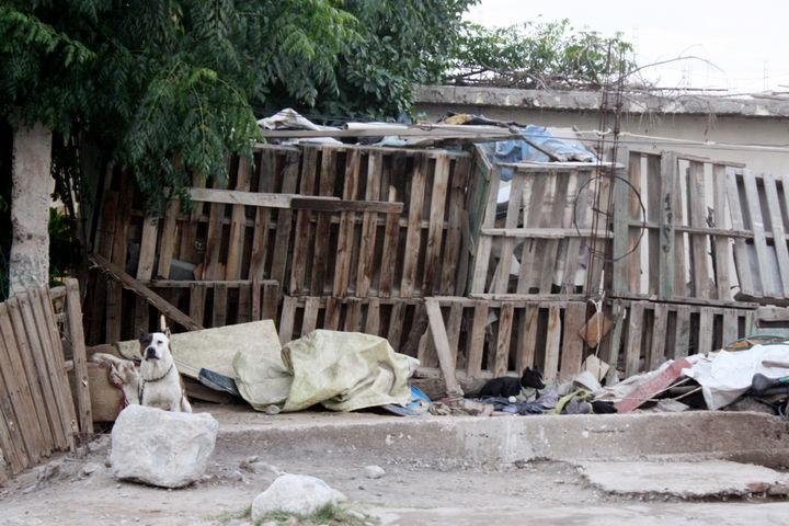 Atacan perros a joven en Torreón