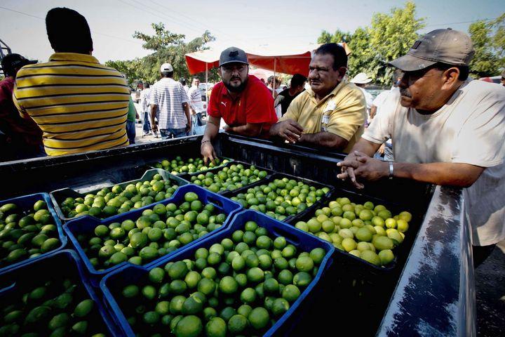 Retoman el control del precio del limón