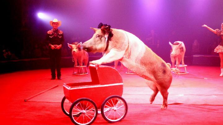 Morelos prohíbe uso de animales en ferias y circos