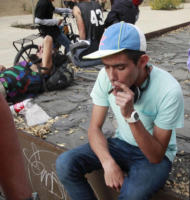 Presentan en Senado iniciativa de cannabis