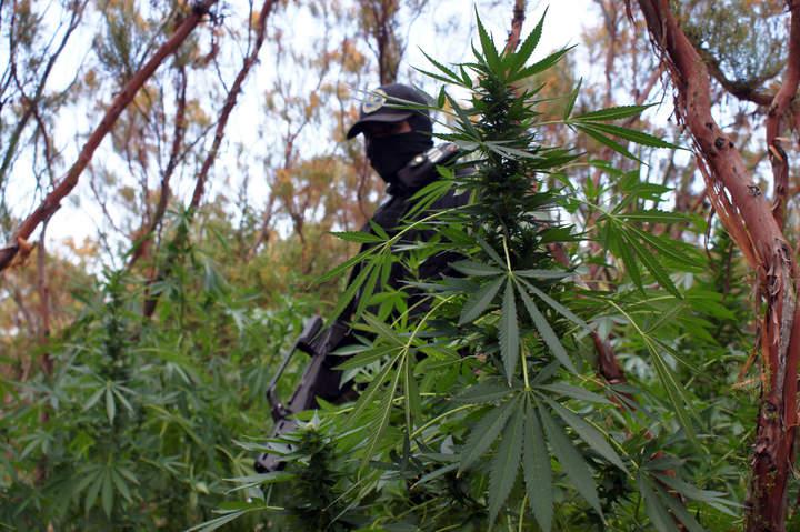 Ejército asegura marihuana en casa
