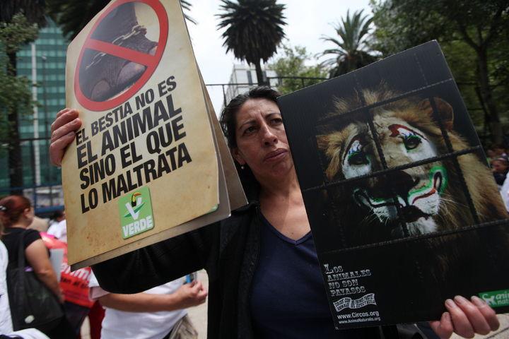 Sancionarán el uso de animales