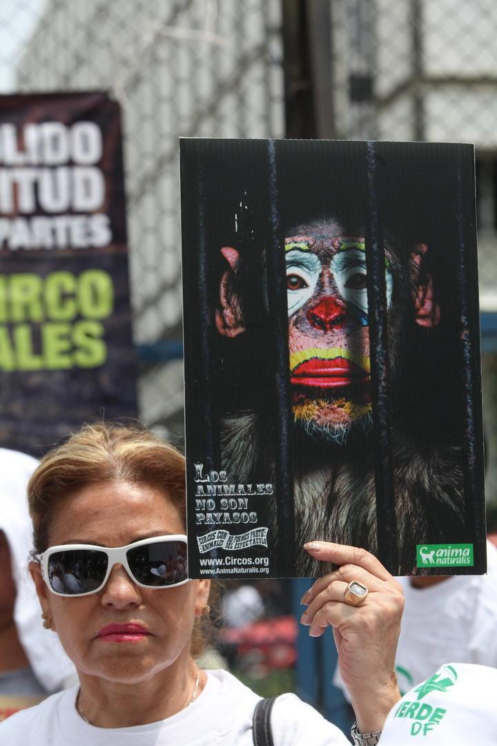 Aprueba ALDF prohibir animales en espectáculos circenses