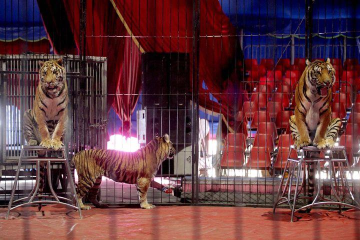 Prohíben uso de animales a circos