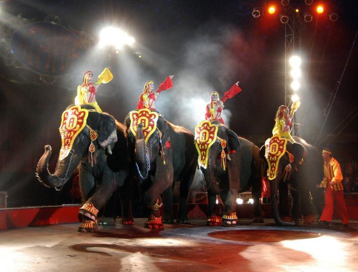 Se suma Apodaca a prohibición de circos con animales