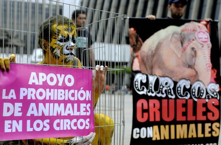 Prohíben animales en circos de Atlixco, Puebla
