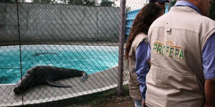 Aseguran a 8 mamíferos marinos de parque acuático