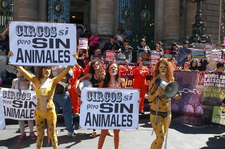 Veracruz prohíbe animales en circos; castigarán maltrato