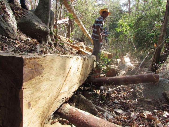 Recuperan madera talada por el crimen