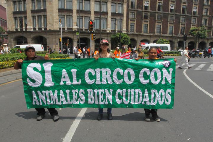 Alistan amparo colectivo contra ley sobre animales en circos