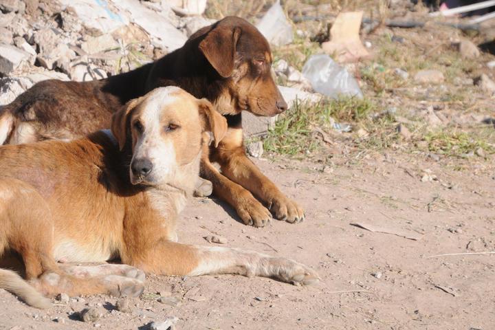 Dejan comida con clavos para matar perros y gatos