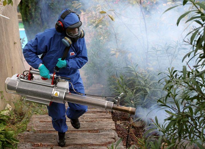 Chikungunya es el verdadero peligro