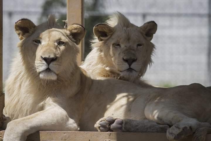 Exhiben más de 1,200 animales