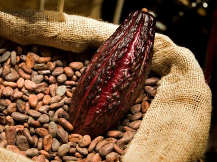 El tabaco y el chocolate en las alcaldías de Parras y Saltillo