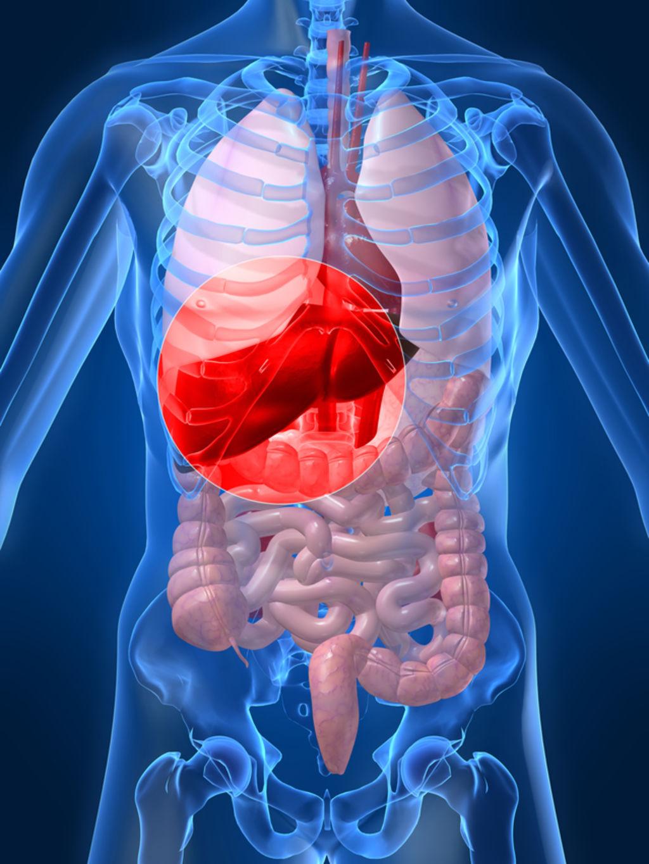 El mapa epigenómico de los principales órganos humanos