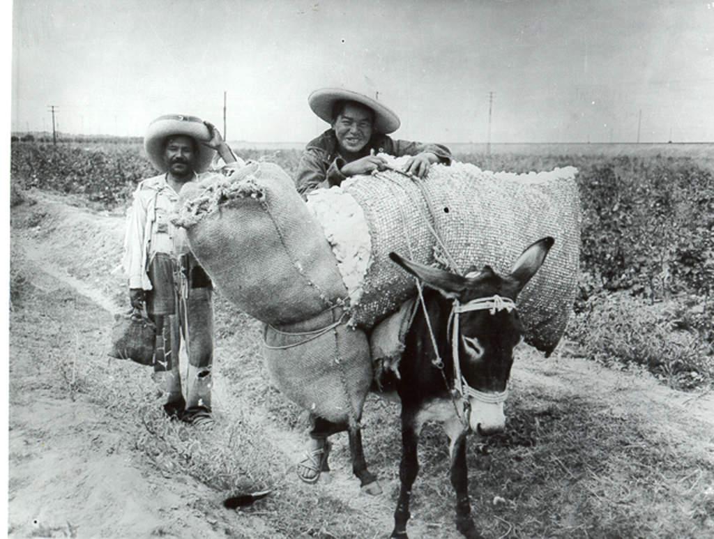 El reparto agrario de 1936 en La Laguna