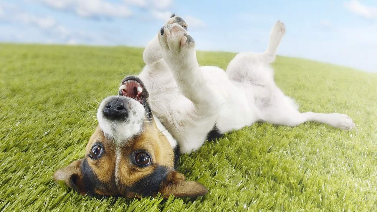 La ciencia dice que los perros sí pueden reír