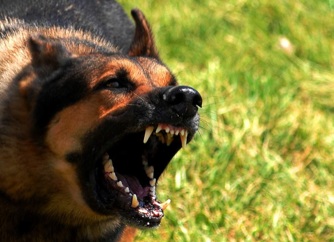 Ex Navy Seal aconseja qué hacer ante el ataque de un perro