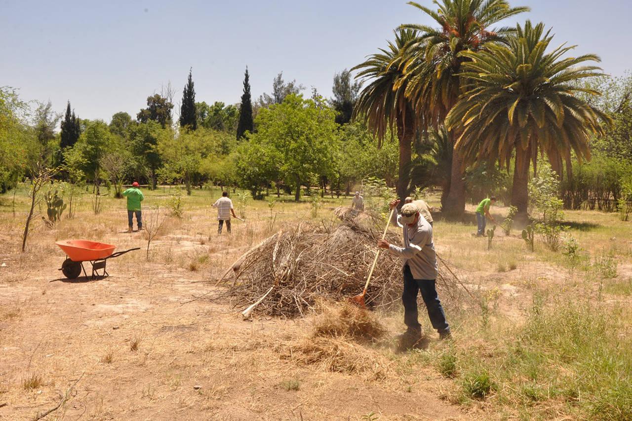 Vivero Forestal Lerdo recibe mantenimiento