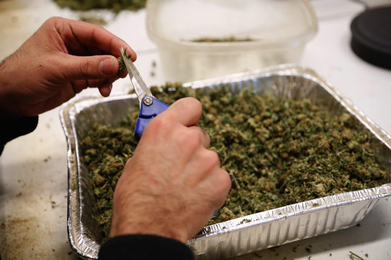 IMSS analizará eficacia medicinal de la marihuana