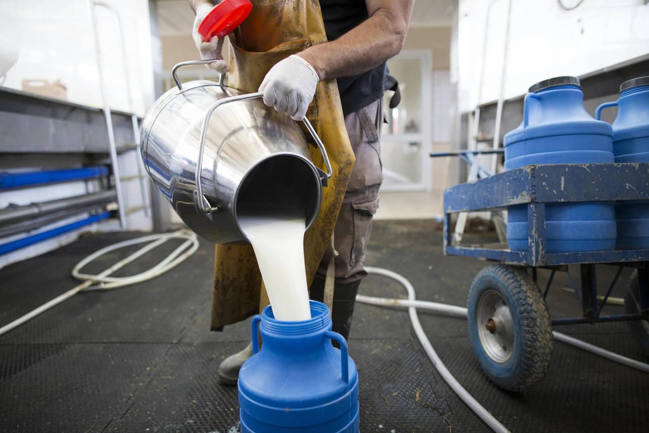 Proponen crear una procesadora de leche