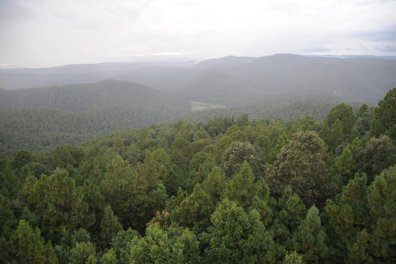 Destinan 158 mdp para el cuidado forestal