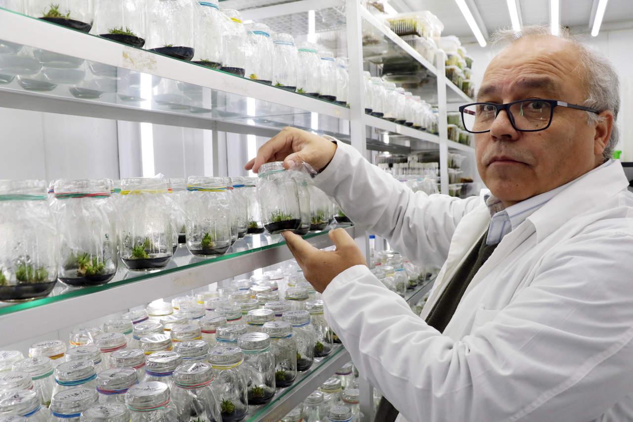 Planta antártica puede actuar como filtro solar para humanos